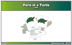 Parts of a Turtle Nomenclature Cards (6-9) Printed