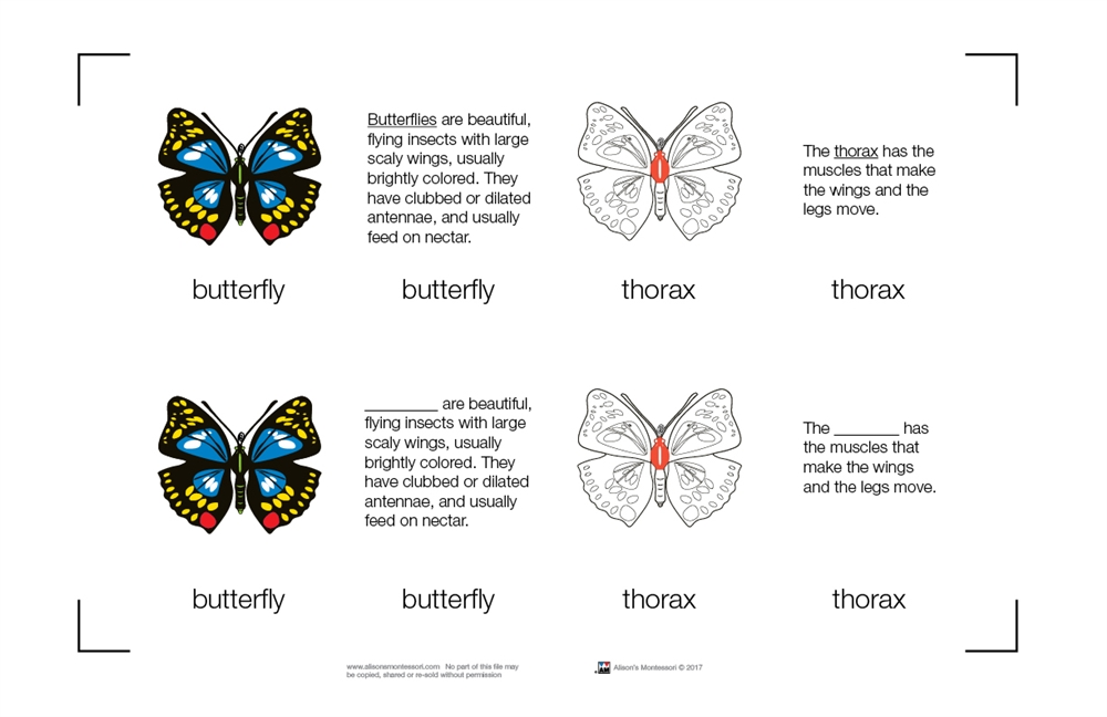 Montessori Materials: Parts of a Butterfly Nomenclature