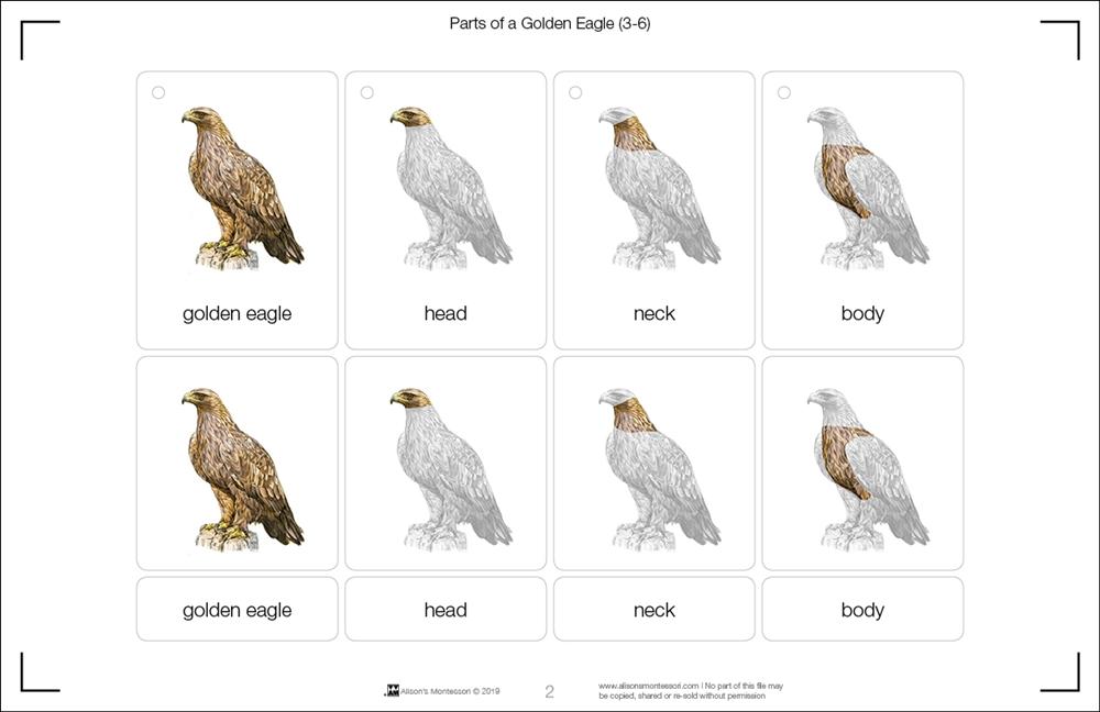 Montessori Materials: Parts of a Golden Eagle (Printed)