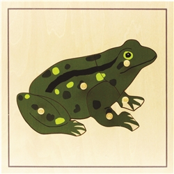 Parts of a Frog Puzzle