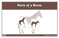 Parts of a Horse Nomenclature Cards (6-9) Printed