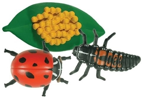 montessori materials life cycle of a ladybug models
