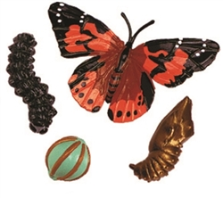 Life Cycle of a Butterfly Models