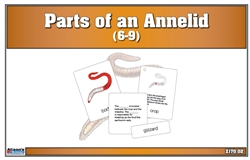 Parts of an Annelid (Printed)