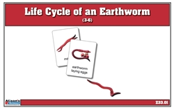 Life Cycle of an Earthworm NC