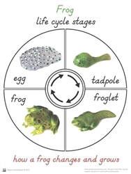 Life Cycle of a Frog Cards