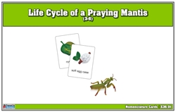 Life Cycle of a Praying Mantis Nomenclature Cards (Printed)