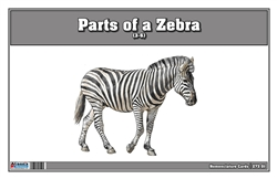 Parts of a Zebra (Printed)