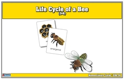 Life Cycle of a Bee Nomenclature Cards