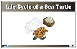 Life Cycle of a Sea Turtle Nomenclature Cards