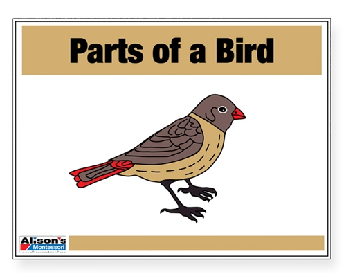 montessori materials parts of a bird puzzle